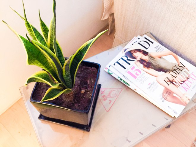 kasvit